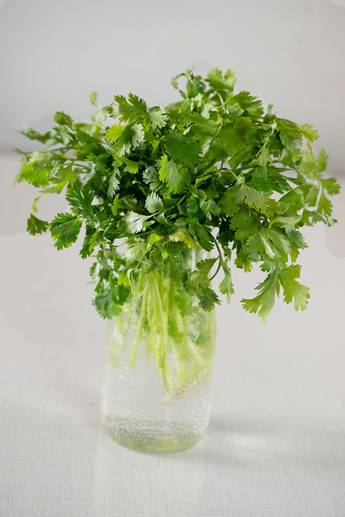 How to store coriander and keep it fresh